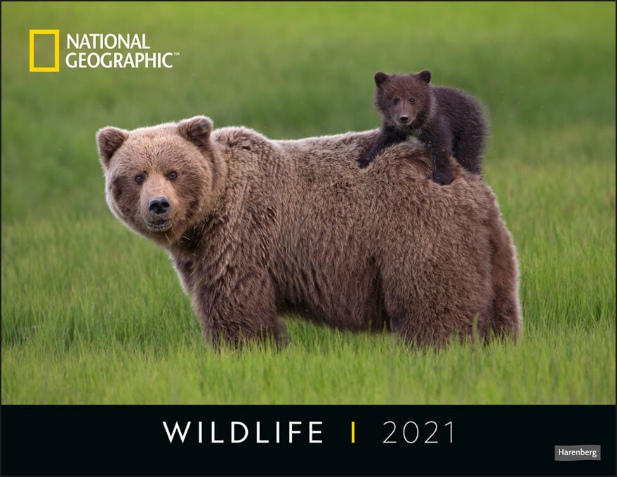 Wildlife Posterkalender National Geographic 2021